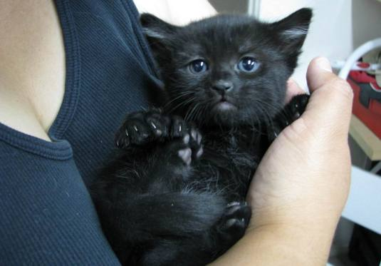 black-cats-pictures-8