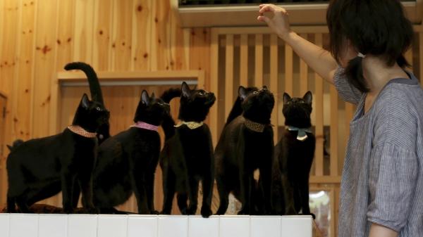 cat-cafe-gatos-negros-2.jpg